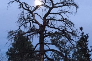Supermoon over Flagstaff