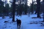 Snow Returns to Flagstaff