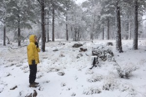 Snow in Flagstaff