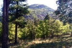 The North Side of Mt. Elden