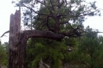 Flagstaff's Fascinating Forests